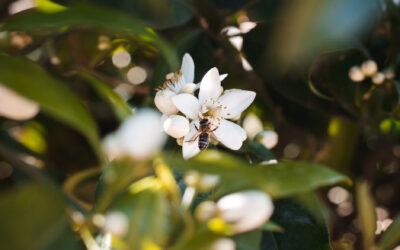 5 ideas para salvar a las abejas